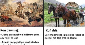 Nie marudź, koniu