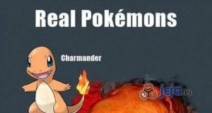Skąd wzięły się inspiracje do Pokemonów