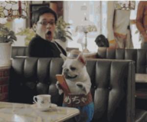 Pieseł i jego smartfon