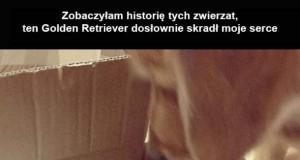 Historia kociaka i Golden Retrievera