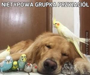 Nietypowa grupka przyjaciół
