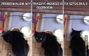 Próbowałem wystraszyć mojego kota sztuczką z ogórkiem