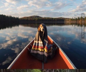 Fotograf zabrał swojego najlepszego przyjaciela na wycieczkę