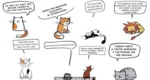 Koty zawsze Cię pocieszą...