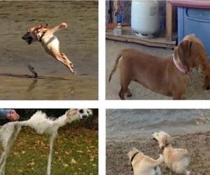 Tryb panoramiczny vs psy - wybierz swojego wojownika