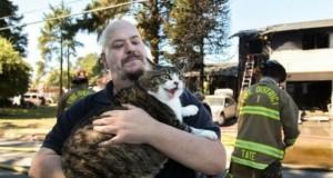 Uratowany kot ofiarą przeróbek