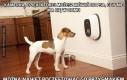 Kamerka, dzięki której możesz mówić do psa, gdy nie ma Cię w domu