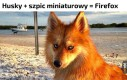 Przepiękna psina