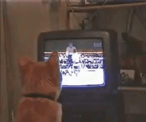 Kiedy zapomnisz nakarmić kota i ten trenuje, żeby dać Ci nauczkę