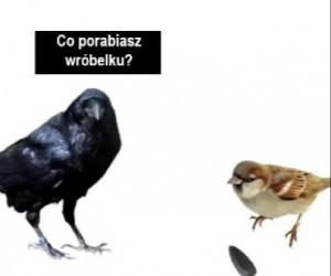 Tak działa wolny rynek
