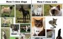 Jak widzę psy, a jak koty