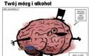 Mózg i alkohol - zupełnie do siebie nie pasują