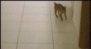 Co robisz kocie?