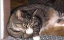 Niegrzeczny kot