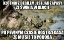 Świnia to lubi