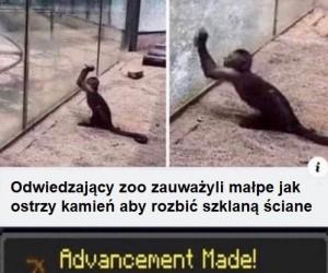 Małpy ewoluują
