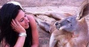 Kangur to jest koleś...