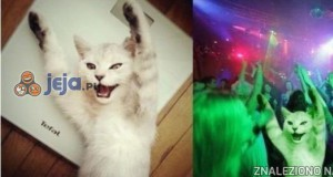 Dyskotekowy koteł