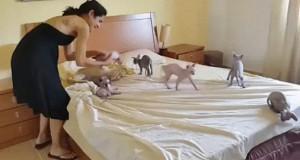 Zrobienie łóżka to prawdziwe wyzwanie...
