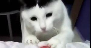 Ten kot powinien zostać piłkarzem