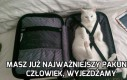 Kot bagażowy