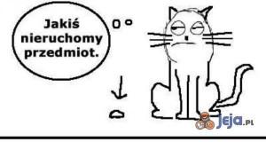 Ach, te koty...