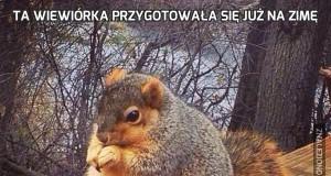 Ta wiewiórka przygotowała się już na zimę