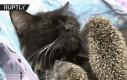 Kotka adoptowała jeżyki