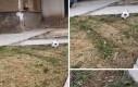 Piłkarski kotek