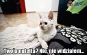 Koty to słabe kłamczuchy