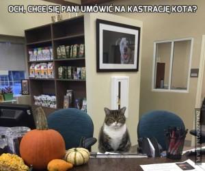 Och, chce się pani umówić na kastrację kota?