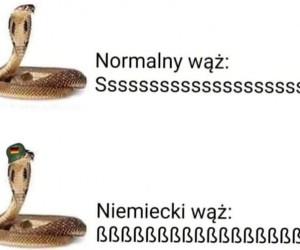 Uwielbiam wężowy jazz