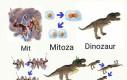 Mitozaur