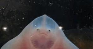 Kiedy otworzę czipsy stojąc przed akwarium