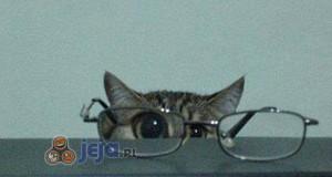 Koteł i okulary