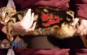Kotek z powitaniem na grzbiecie