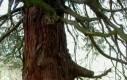 Brzydkie drzewo