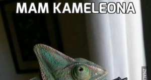 Mam kameleona