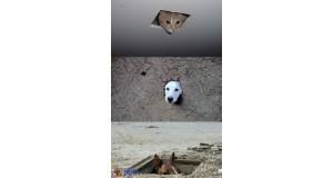 Zwierzaki z ukrycia