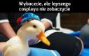 Żywy Kaczor Donald