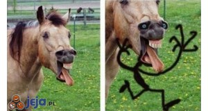 Straszny koń