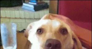 Przerażony pies