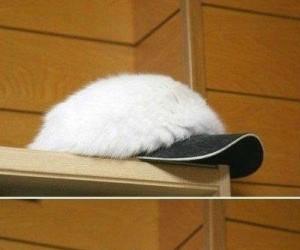 Niezwykła czapka z daszkiem