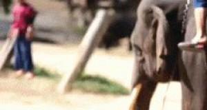 Słoniowy mundial