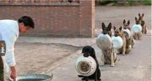 Psy vs ludzie