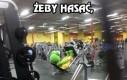 Żaba ostro pakuje na siłowni