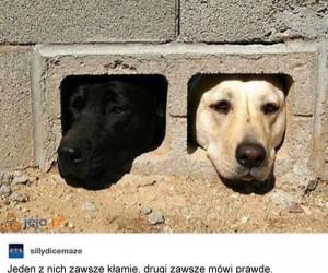 Psia zagadka