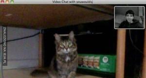 Kot rozpoznaje właściciela podczas video rozmowy