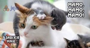 Zrób sobie kociaki, mówili. Będzie fajnie, mówili.