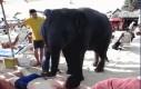 Słoń masażysta